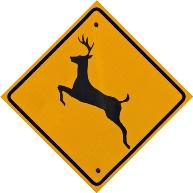 Deer Crossing 1