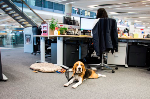 insurance, horst insurance, office pet, dogs in the workplace, office animal