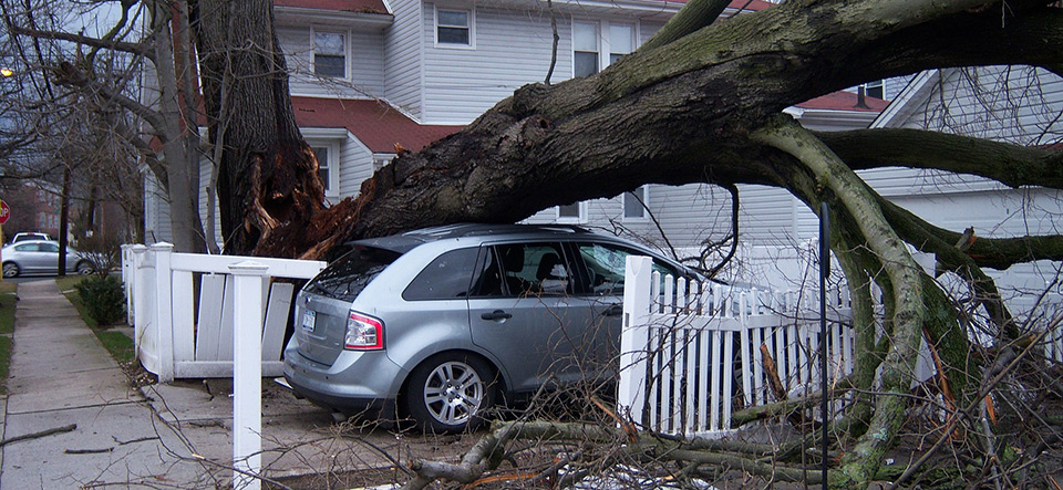 Car crushed by a tree